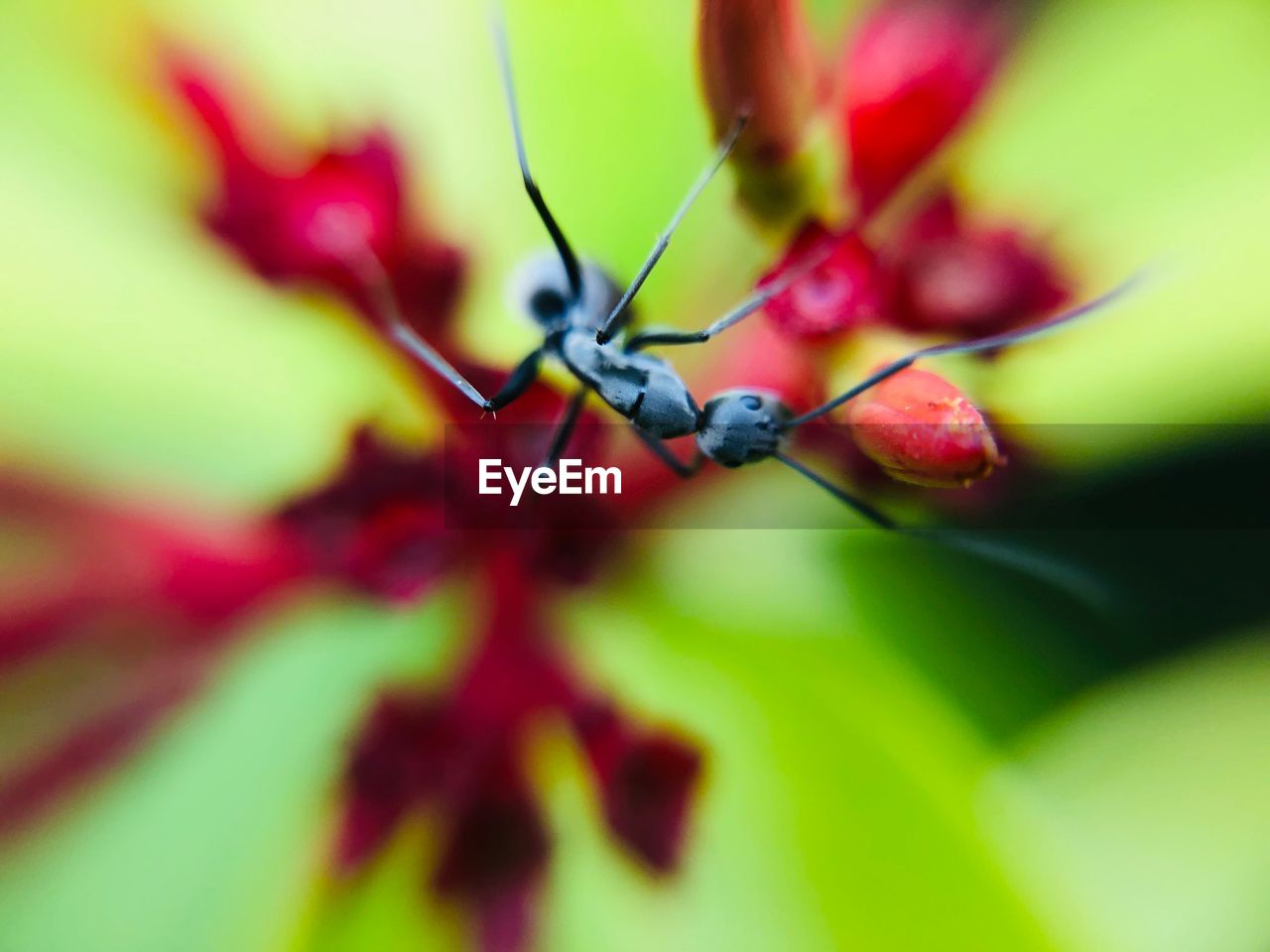 selective focus, close-up, plant, no people, growth, plant part, day, leaf, green color, invertebrate, beauty in nature, nature, freshness, fruit, insect, animal wildlife, fragility, red, one animal, animals in the wild