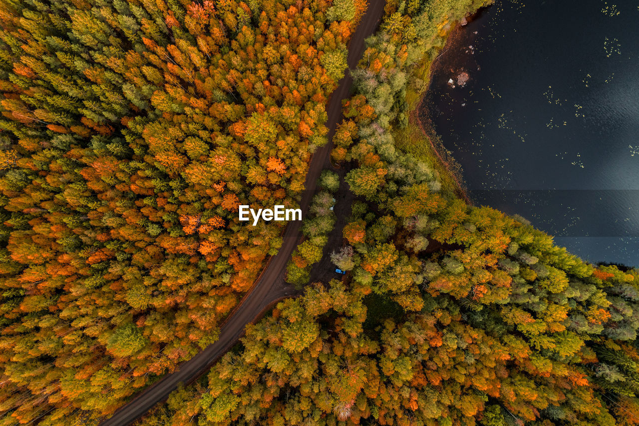 autumn, change, plant, orange color, beauty in nature, tree, nature, growth, no people, day, yellow, leaf, plant part, outdoors, scenics - nature, high angle view, tranquility, land, abundance, idyllic, fall, autumn collection, natural condition