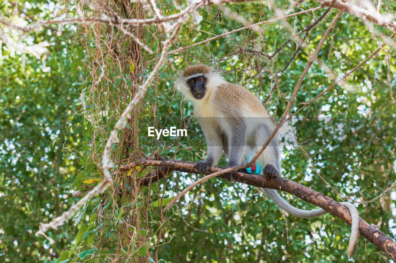 LOW ANGLE VIEW OF MONKEY SITTING ON TREE BRANCH