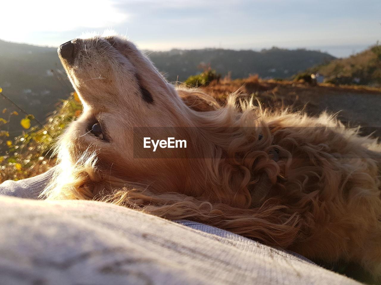 Portrait Of Dog Lying On Back Against Sky