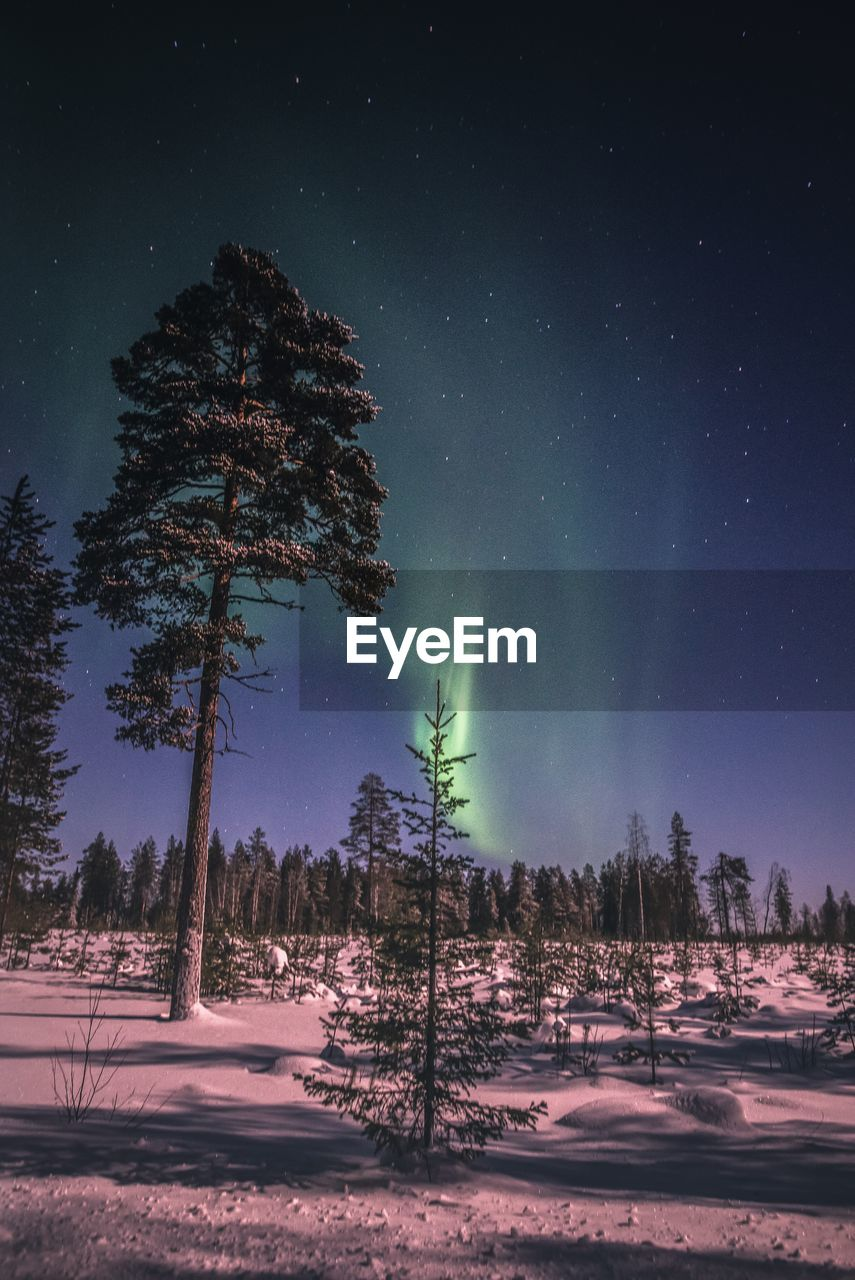 tree, night, plant, beauty in nature, sky, scenics - nature, astronomy, star - space, tranquil scene, tranquility, space, cold temperature, snow, land, nature, winter, no people, non-urban scene, landscape, environment, outdoors