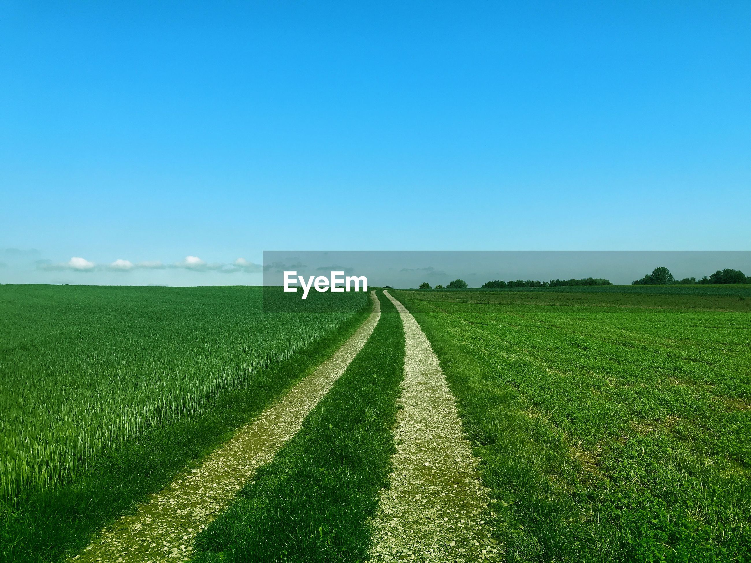 SCENIC VIEW OF FARM FIELD AGAINST CLEAR SKY