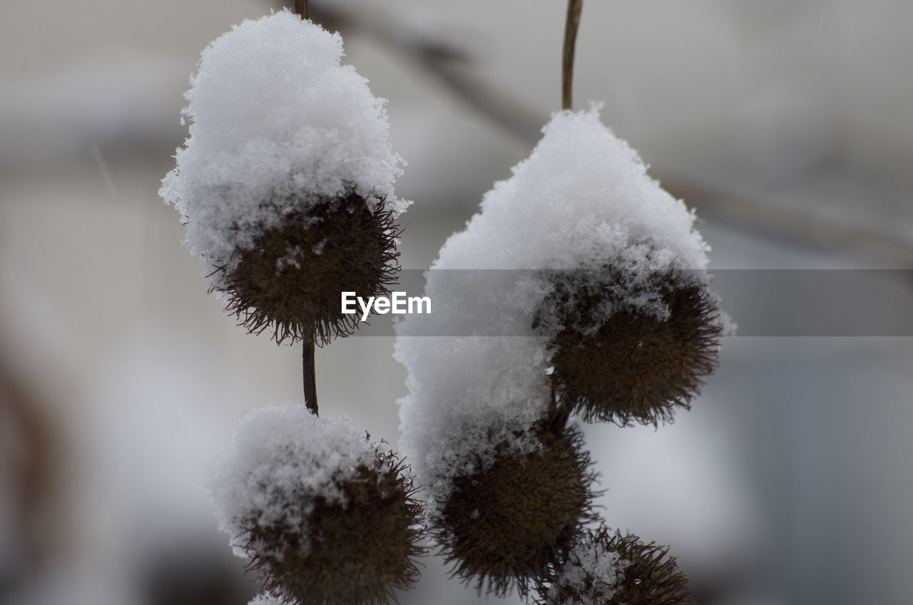 CLOSE-UP OF FROZEN PLANT AGAINST TREES