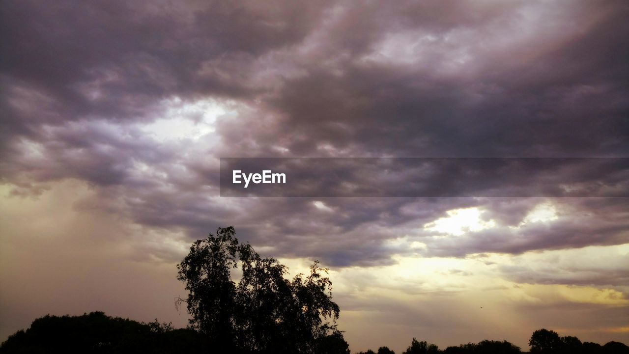 tree, nature, sky, beauty in nature, cloud - sky, sunset, low angle view, silhouette, scenics, tranquility, tranquil scene, outdoors, no people, growth, storm cloud, day