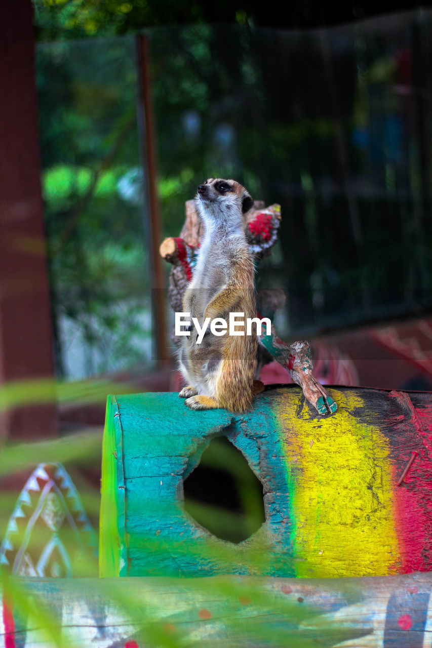 animal themes, animal, mammal, one animal, vertebrate, no people, animal wildlife, pets, domestic animals, rodent, day, focus on foreground, domestic, animals in the wild, close-up, nature, outdoors, multi colored, bird feeder, zoology, whisker