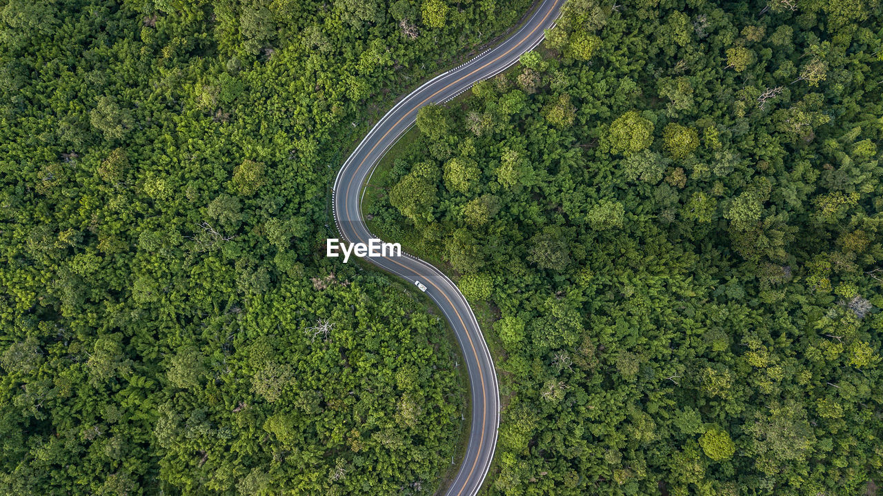 plant, green color, tree, aerial view, road, curve, high angle view, transportation, growth, nature, no people, beauty in nature, day, scenics - nature, landscape, environment, mode of transportation, tranquility, tranquil scene, outdoors, above