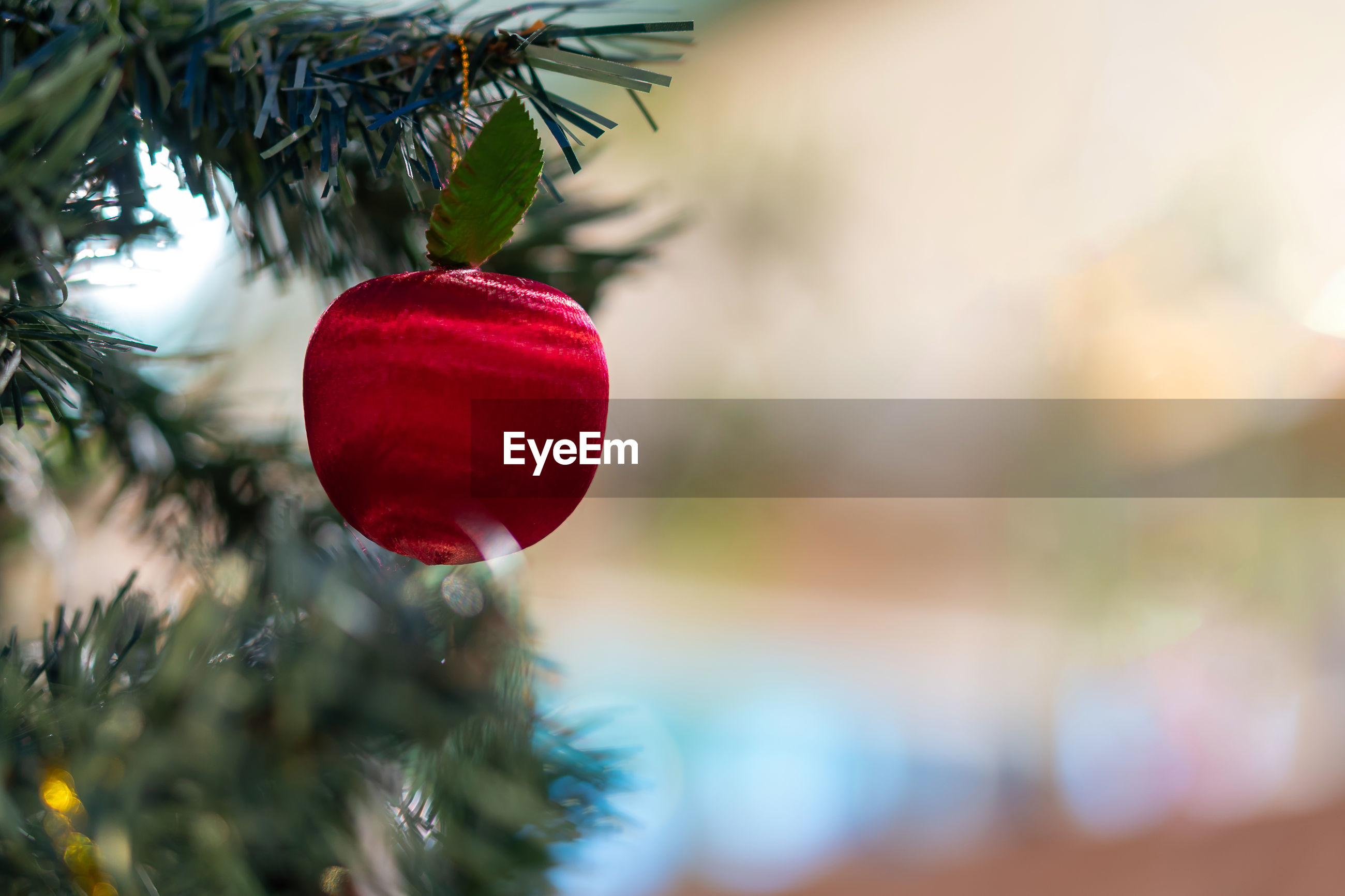 CLOSE-UP OF CHRISTMAS DECORATIONS HANGING ON TREE AGAINST BLURRED BACKGROUND