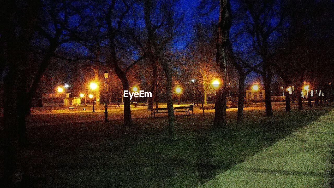 illuminated, night, tree, bare tree, outdoors, street light, nature, branch, no people, beauty in nature, sky