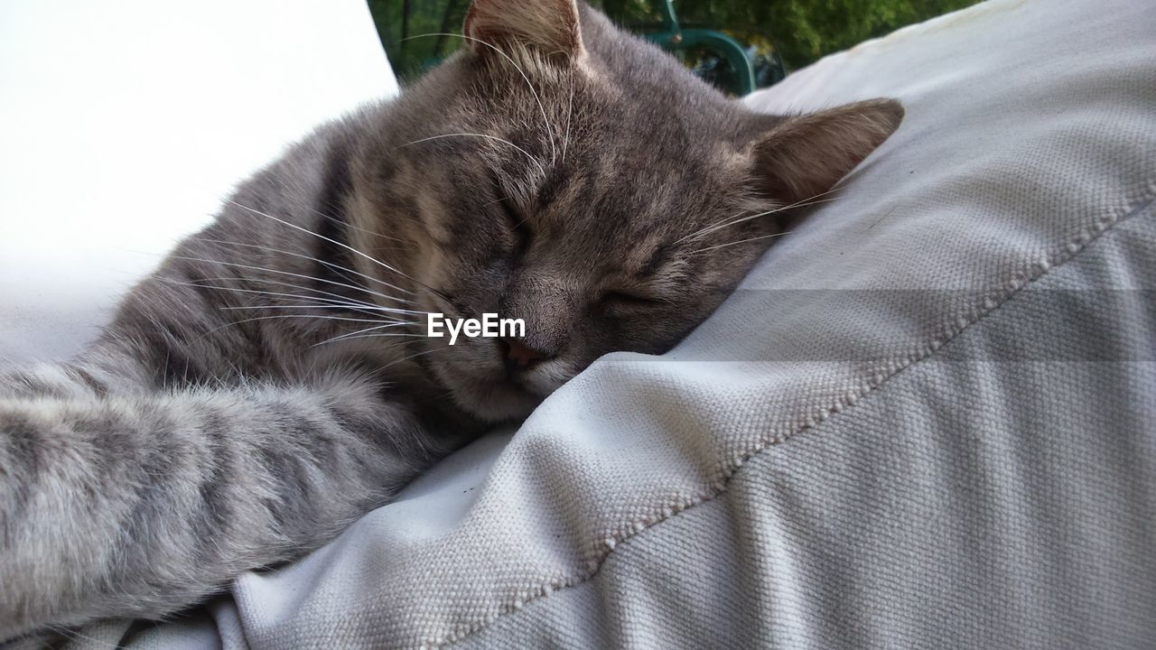 cat, domestic cat, feline, one animal, mammal, animal, animal themes, domestic, pets, domestic animals, relaxation, vertebrate, no people, sleeping, furniture, close-up, indoors, resting, eyes closed, bed, whisker, animal head, napping