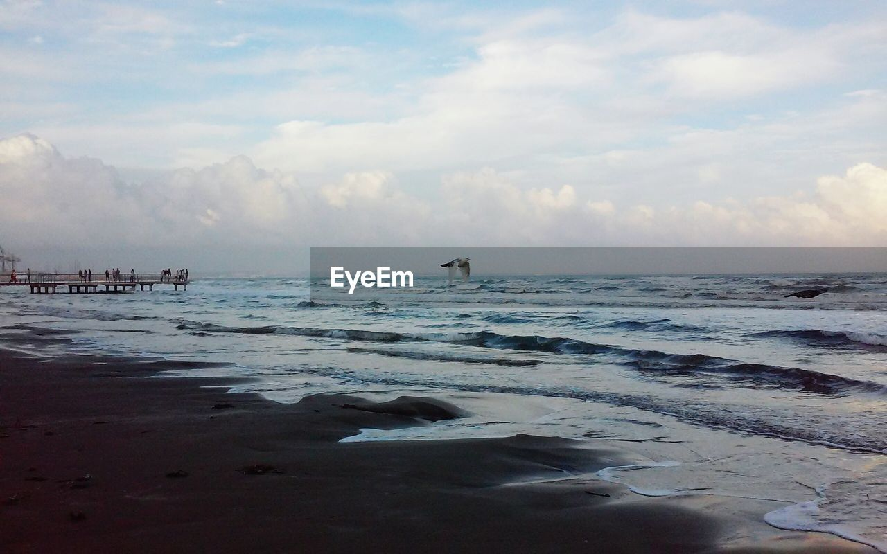sea, water, sky, nature, beauty in nature, beach, cloud - sky, scenics, horizon over water, tranquility, outdoors, tranquil scene, day, wave, vacations, bird, swimming, animal themes, no people