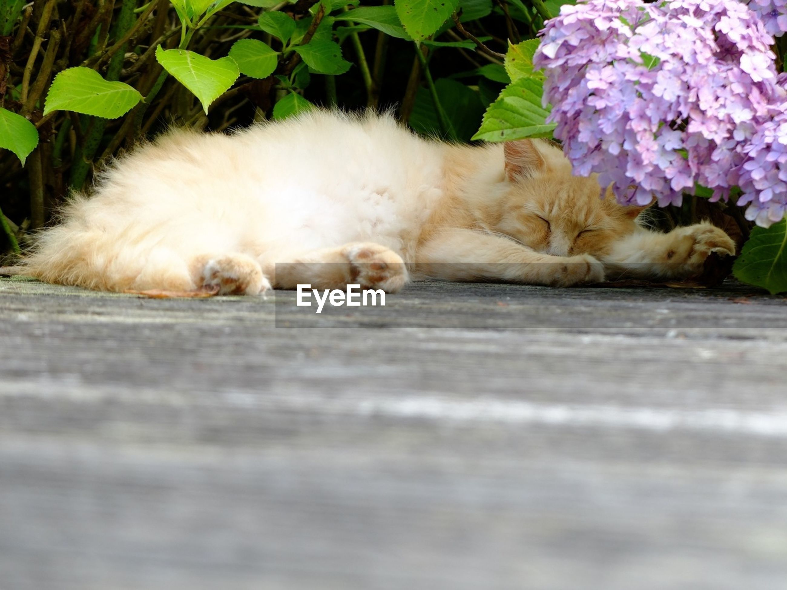 domestic animals, pets, animal themes, mammal, one animal, domestic cat, relaxation, sleeping, cat, resting, lying down, feline, eyes closed, indoors, relaxing, no people, selective focus, zoology, close-up, comfortable