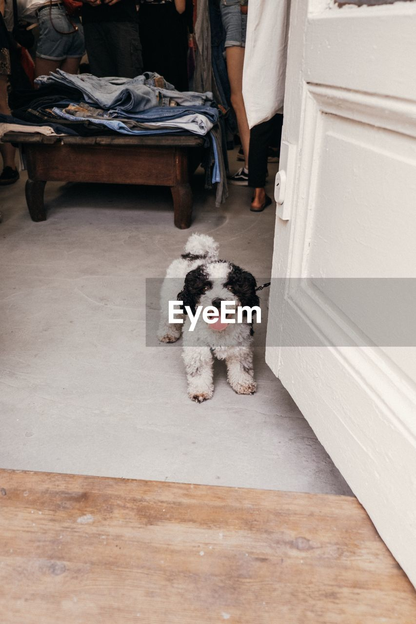 domestic, pets, one animal, domestic animals, mammal, dog, canine, looking at camera, vertebrate, portrait, people, indoors, home interior, sitting, low section, flooring, entrance