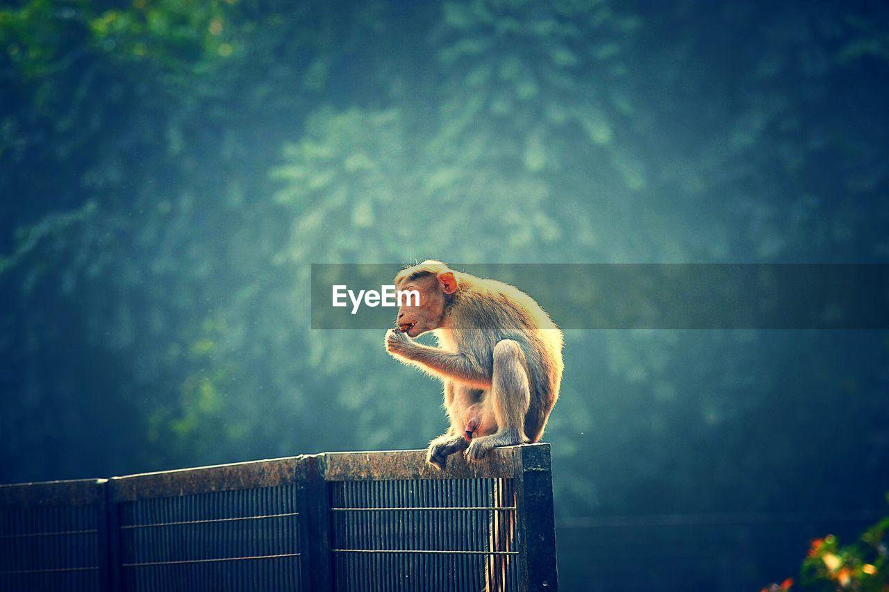 Monkey Sitting On Metal Fence Against Trees