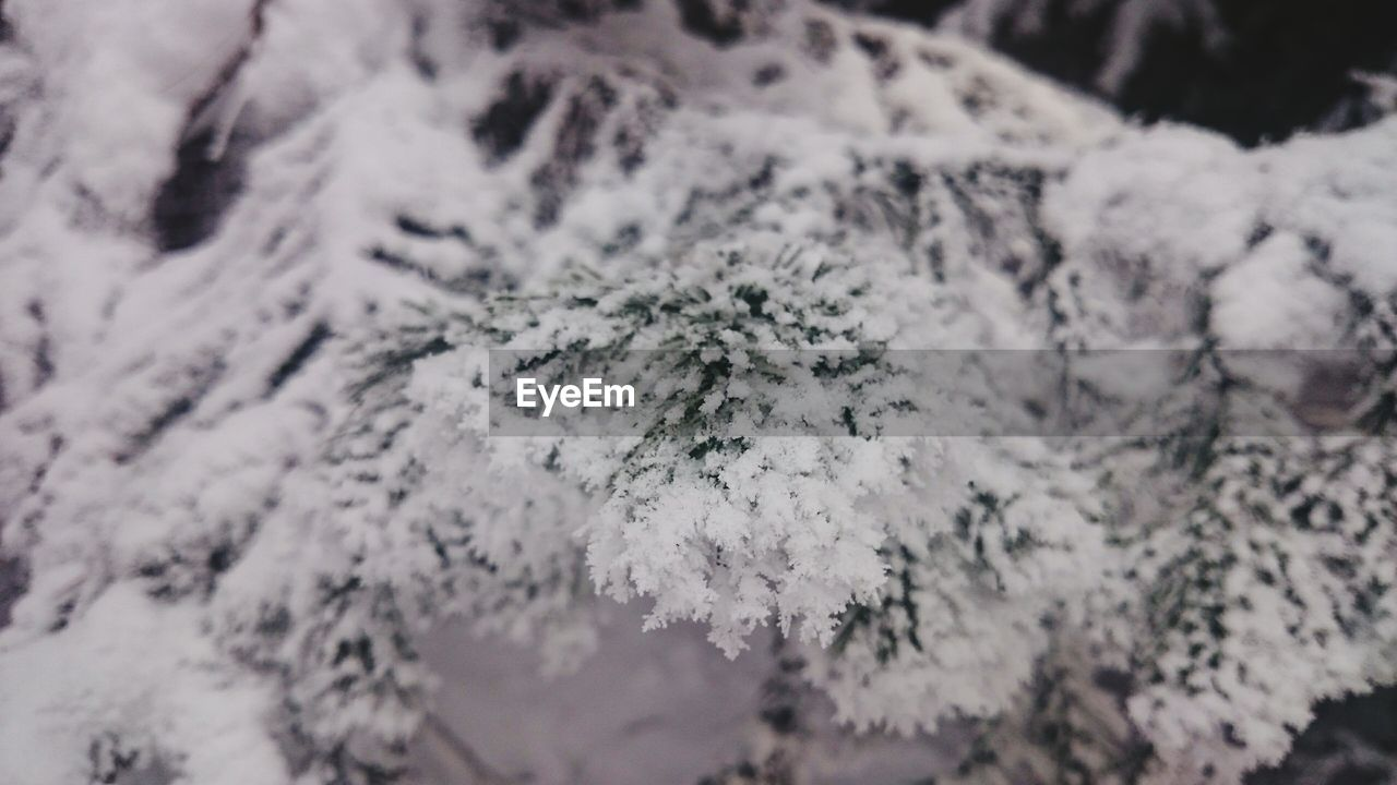 snow, winter, cold temperature, nature, weather, white color, beauty in nature, no people, tree, close-up, day, frozen, outdoors, fragility, tranquility, focus on foreground, snowflake