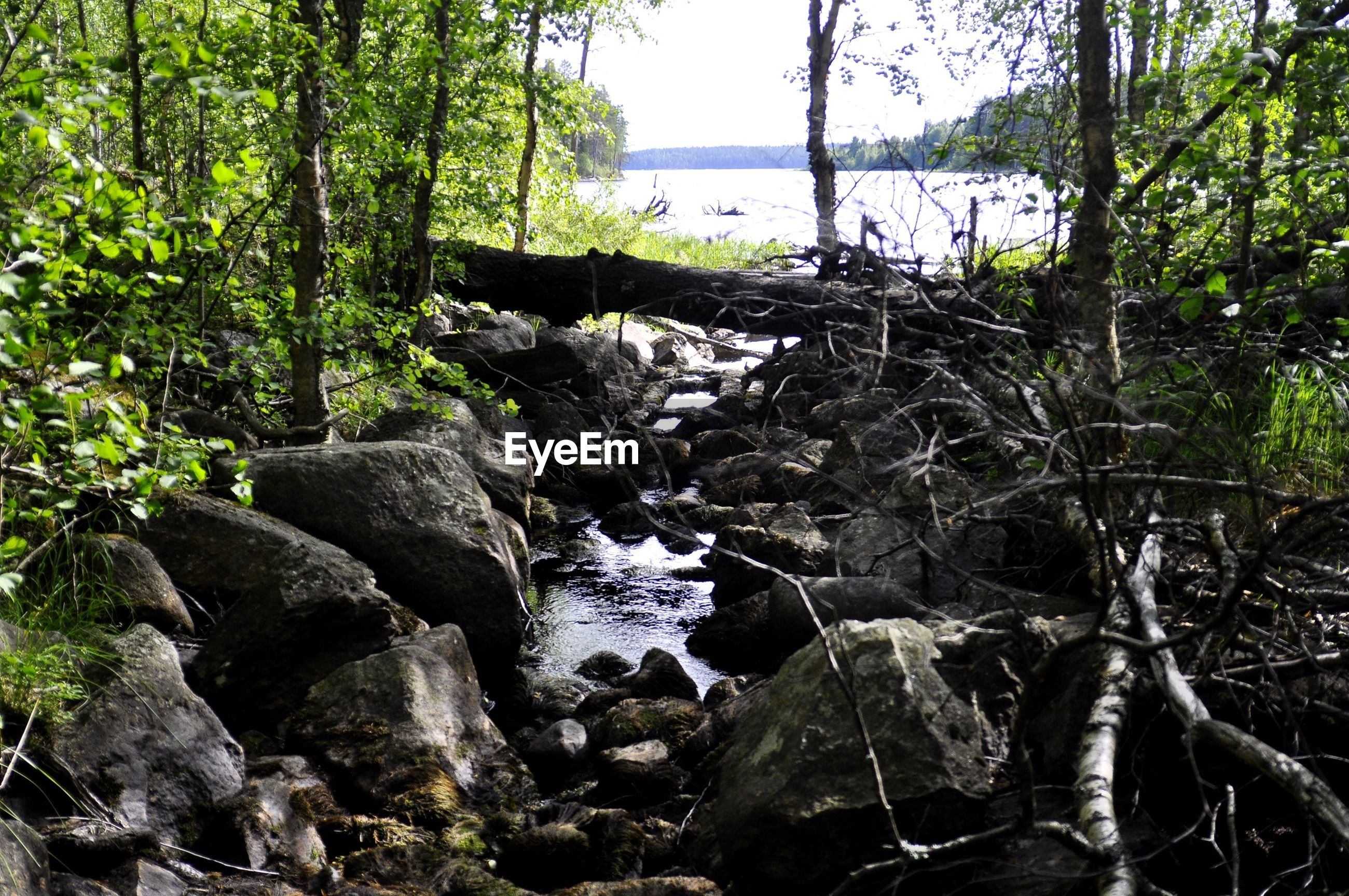 water, tranquility, tranquil scene, tree, scenics, beauty in nature, sea, nature, rock - object, idyllic, plant, rock, growth, branch, rock formation, day, forest, non-urban scene, horizon over water, outdoors