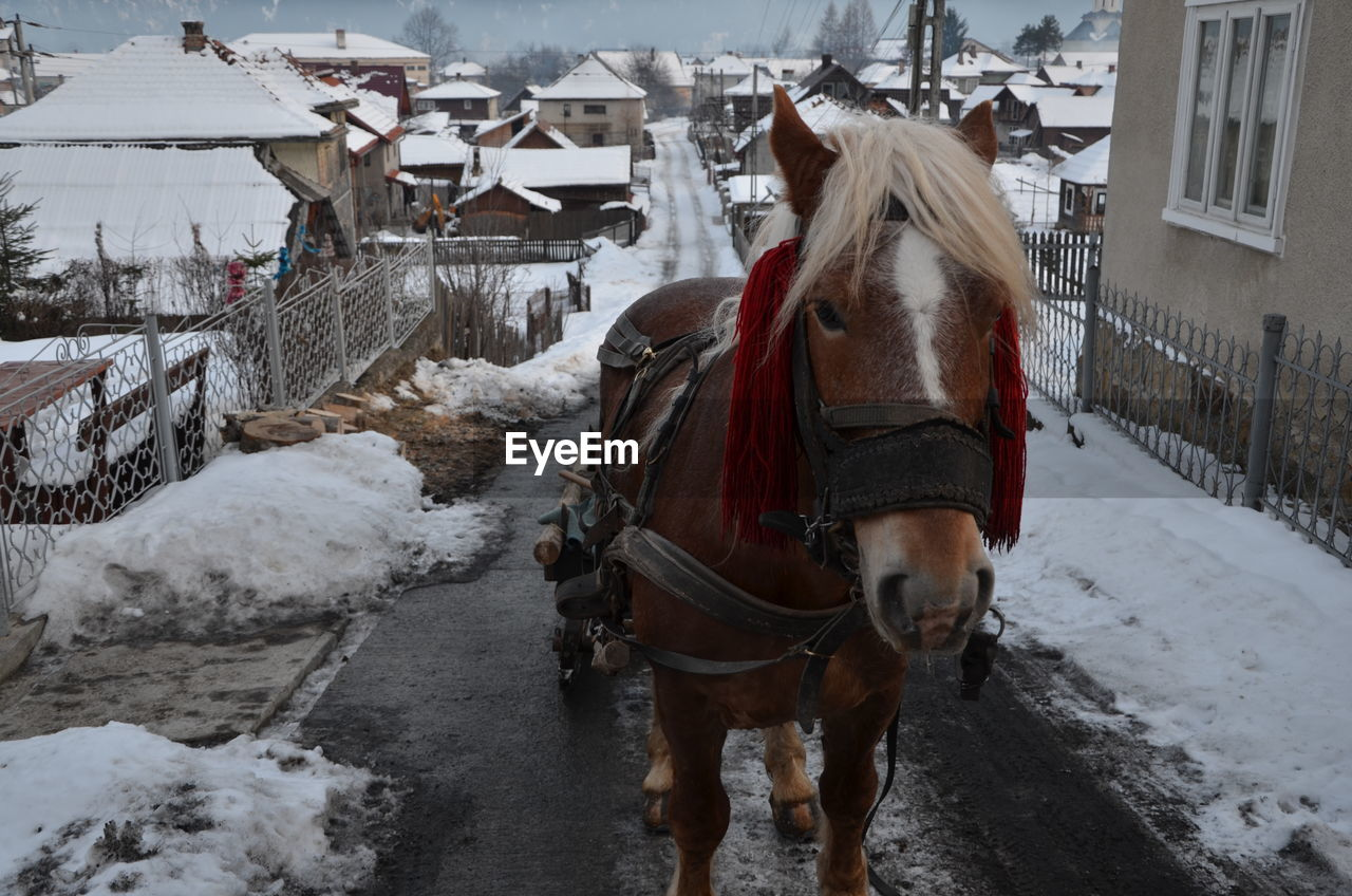 Horse Pulling Cart On Road During Winter