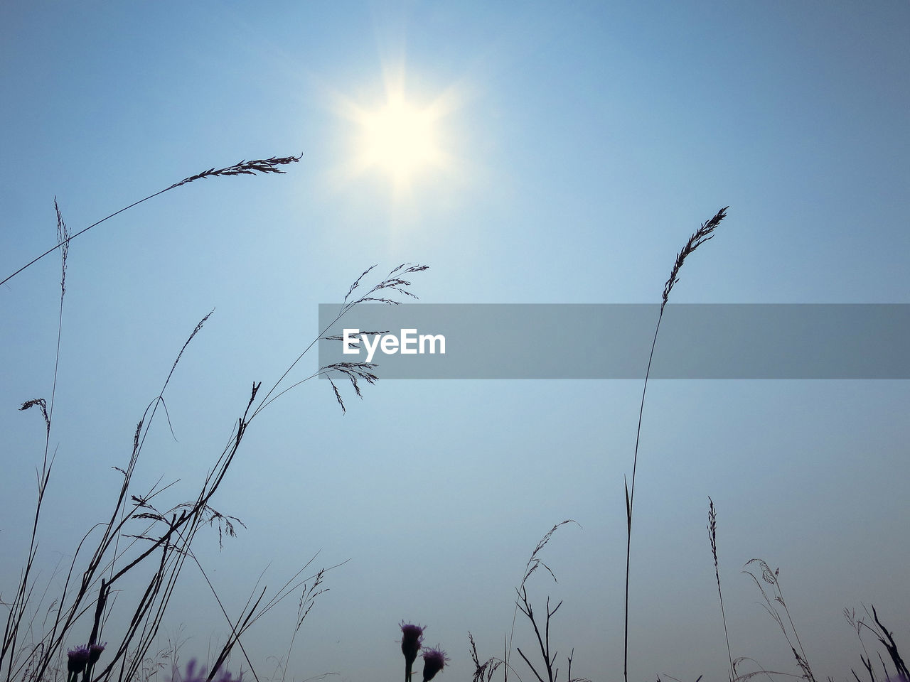 sun, nature, sunlight, beauty in nature, outdoors, low angle view, silhouette, growth, sky, clear sky, flying, tranquility, day, no people, scenics, bird