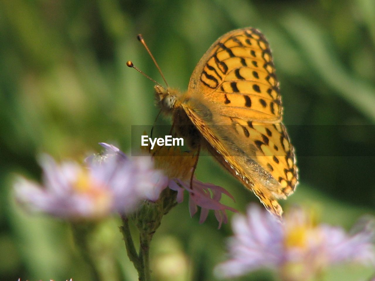 insect, one animal, animal themes, butterfly, animals in the wild, butterfly - insect, nature, no people, close-up, plant, growth, outdoors, day, flower