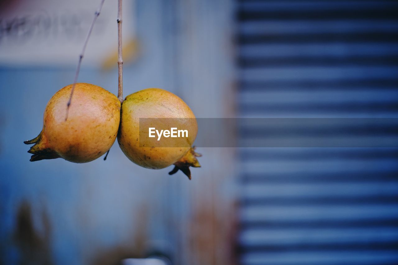 fruit, focus on foreground, food, healthy eating, food and drink, close-up, freshness, no people, day, wellbeing, plant, nature, outdoors, growth, hanging, plant part, leaf, selective focus, yellow, beauty in nature, ripe