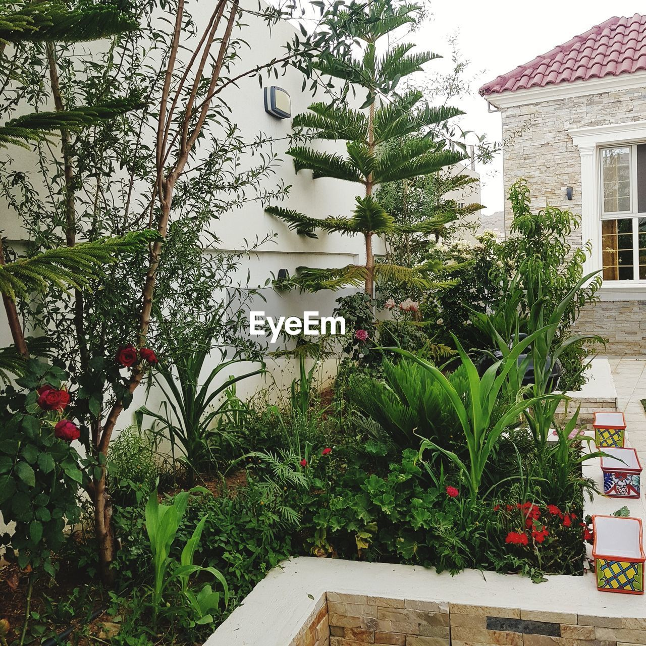 plant, architecture, built structure, growth, building exterior, tree, building, nature, house, day, green color, no people, front or back yard, outdoors, leaf, plant part, beauty in nature, garden, residential district, potted plant, courtyard