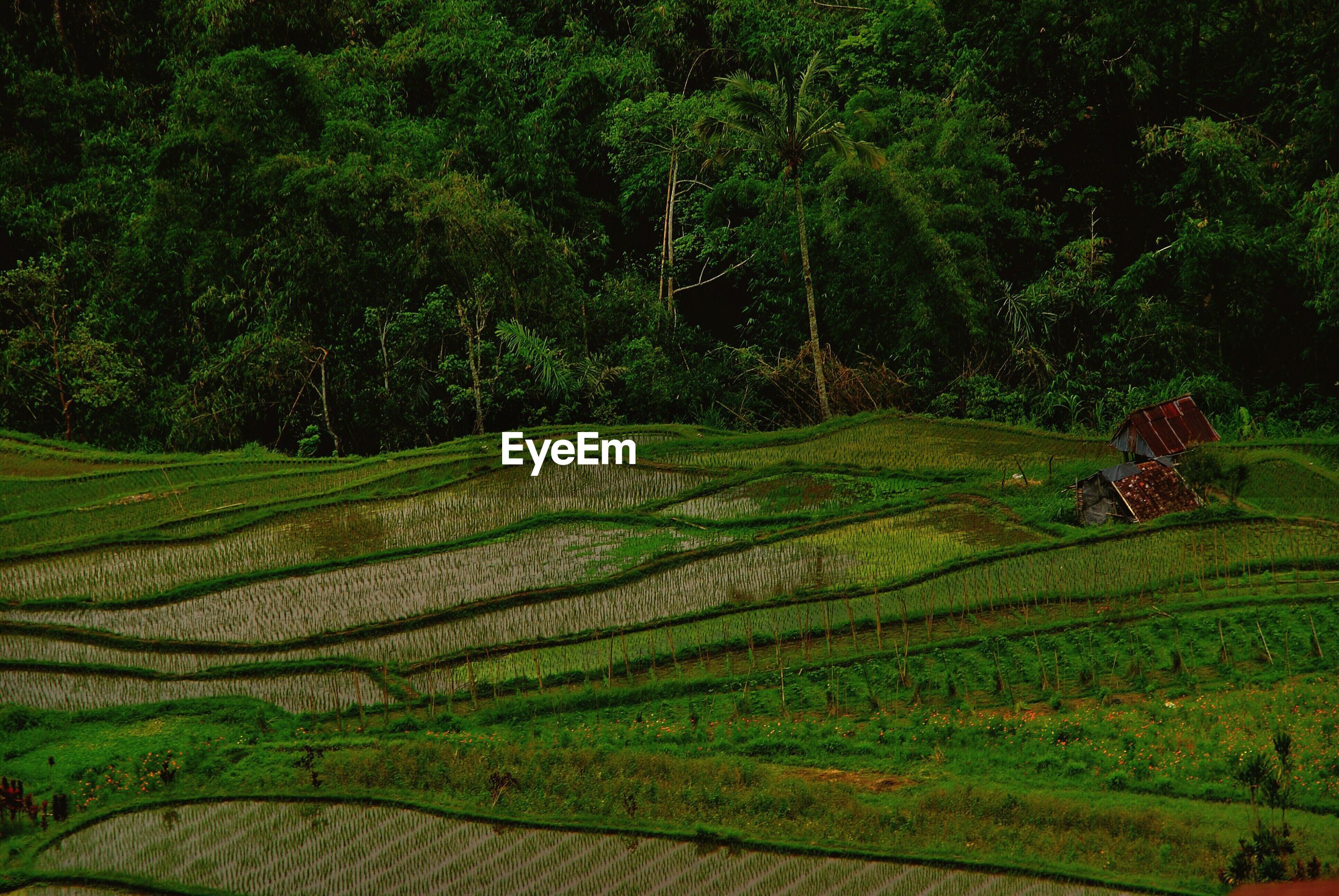 High angle view of green rural field