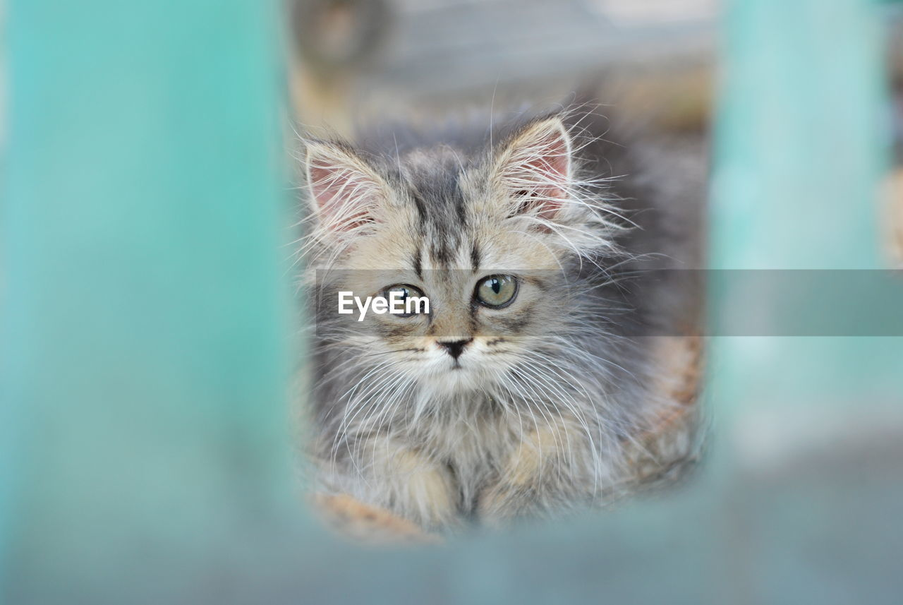 CLOSE-UP PORTRAIT OF CAT BY BLURRED BACKGROUND