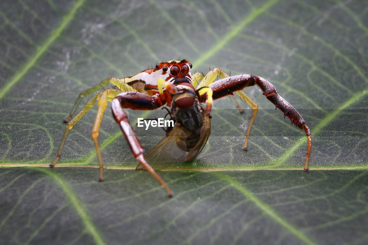 animal wildlife, animal themes, animals in the wild, animal, insect, invertebrate, one animal, close-up, plant part, leaf, nature, day, no people, arthropod, green color, selective focus, outdoors, arachnid, zoology, animal body part, animal leg