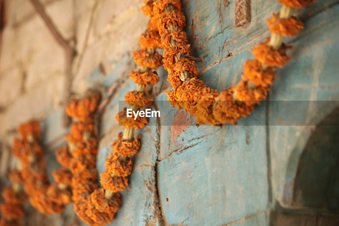 close-up, selective focus, no people, day, plant, orange color, rusty, focus on foreground, outdoors, metal, wood - material, nature, tree trunk, trunk, run-down, textured, wall - building feature, damaged, abandoned, old