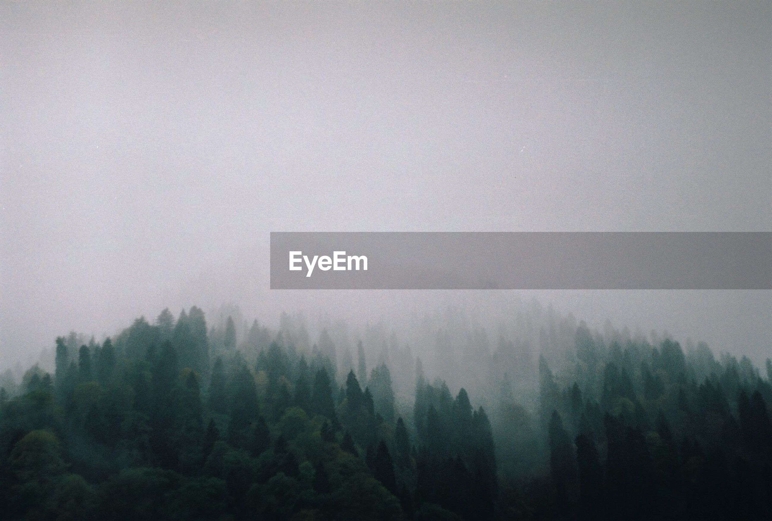 SCENIC VIEW OF FOREST IN FOGGY WEATHER AGAINST SKY