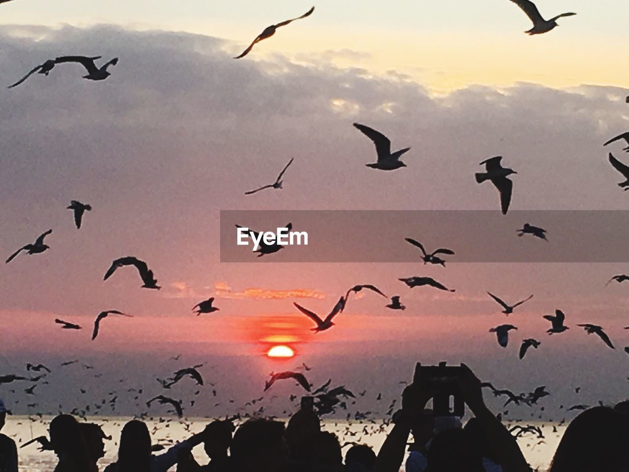 vertebrate, bird, animal themes, animal, flying, group of animals, animals in the wild, animal wildlife, sunset, sky, large group of animals, silhouette, nature, flock of birds, spread wings, mid-air, orange color, beauty in nature, no people, motion, outdoors, seagull