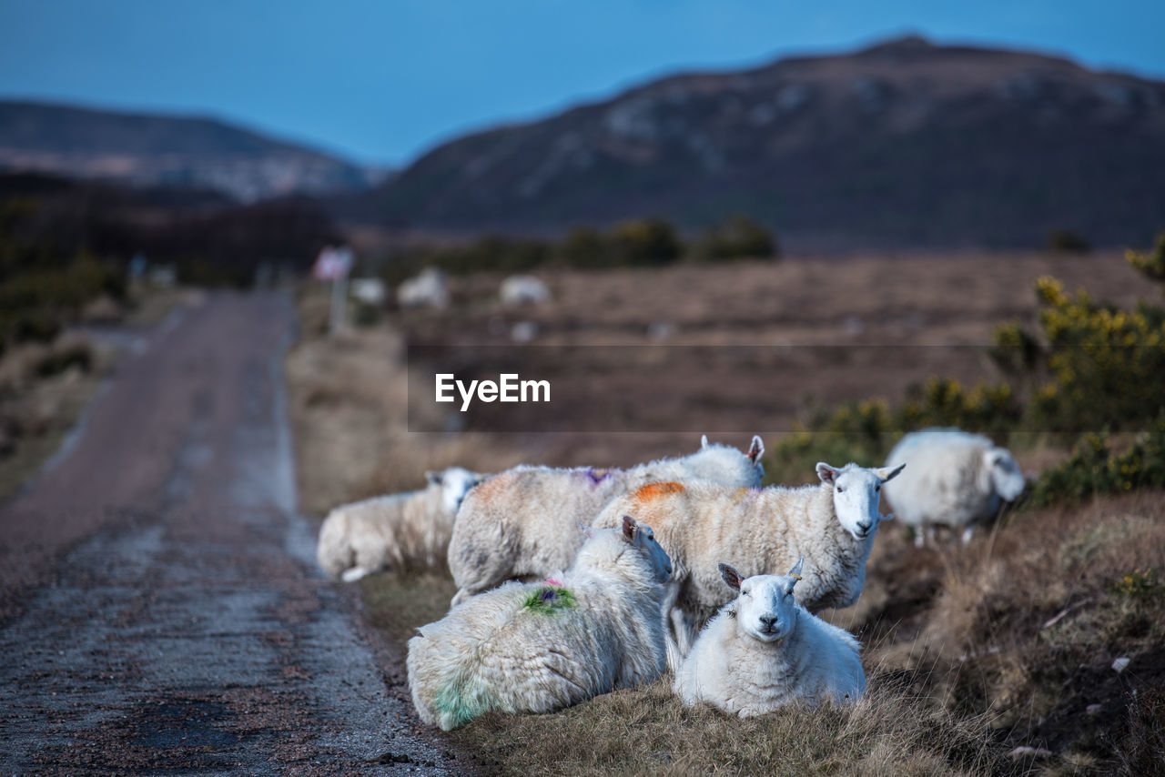 Sheep In Farm Against Sky
