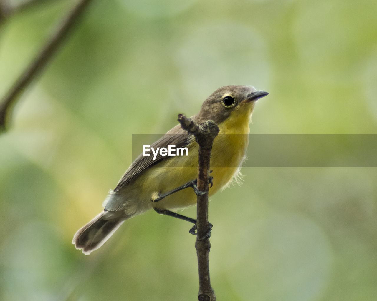 animal themes, animal, animal wildlife, bird, one animal, animals in the wild, vertebrate, perching, plant, focus on foreground, close-up, nature, no people, day, outdoors, branch, twig, beauty in nature, green color, tree