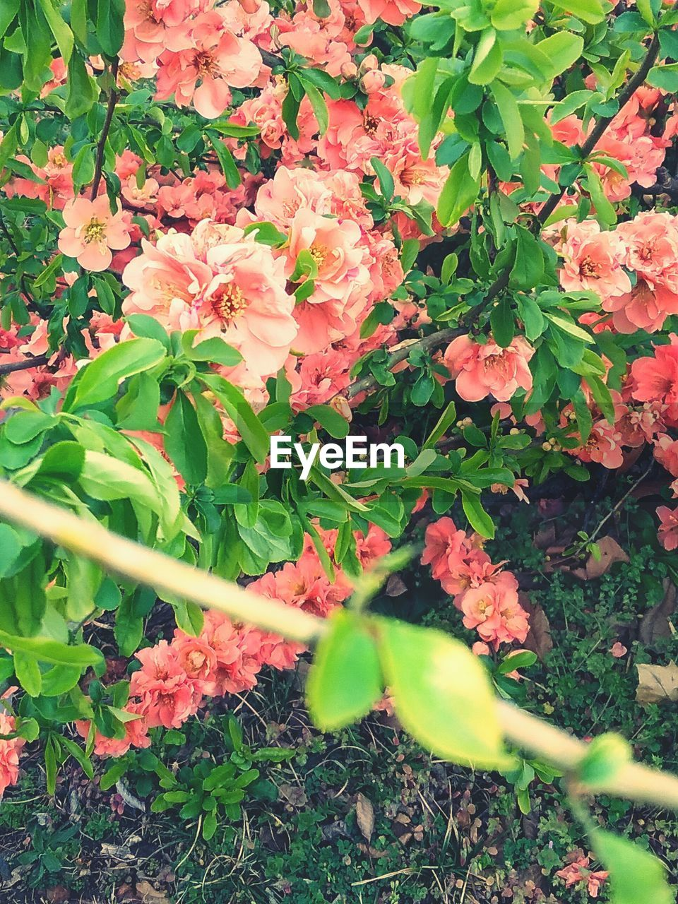 flower, growth, plant, leaf, beauty in nature, freshness, fragility, nature, outdoors, day, no people, flower head, blooming, close-up