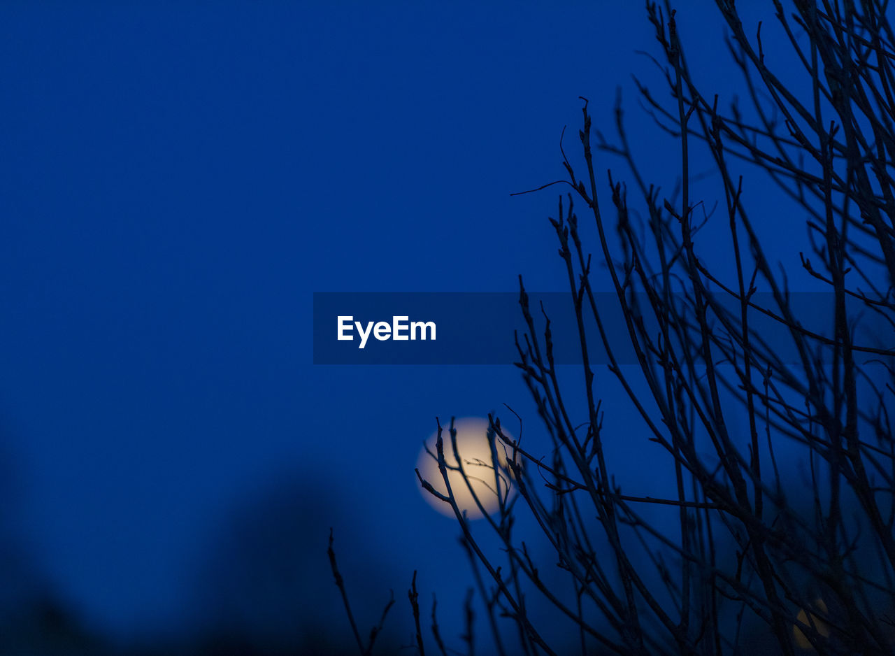 sky, plant, blue, tree, beauty in nature, no people, tranquility, low angle view, nature, branch, silhouette, growth, scenics - nature, moon, bare tree, clear sky, copy space, outdoors, dusk, night