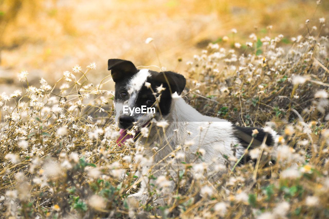 Dog amidst wildflowers
