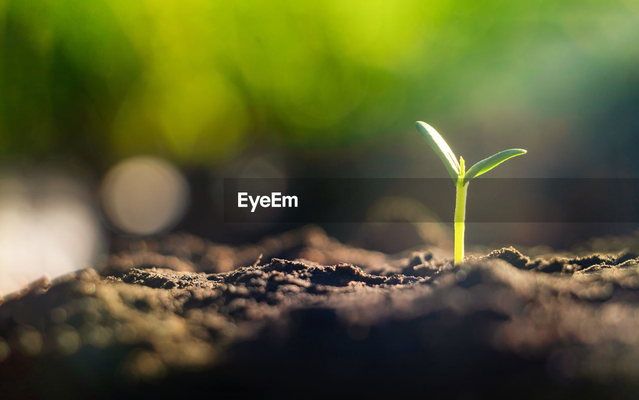 selective focus, growth, close-up, plant, nature, green color, new life, seedling, no people, beginnings, sapling, beauty in nature, day, plant part, leaf, dirt, outdoors, vulnerability, fragility, land