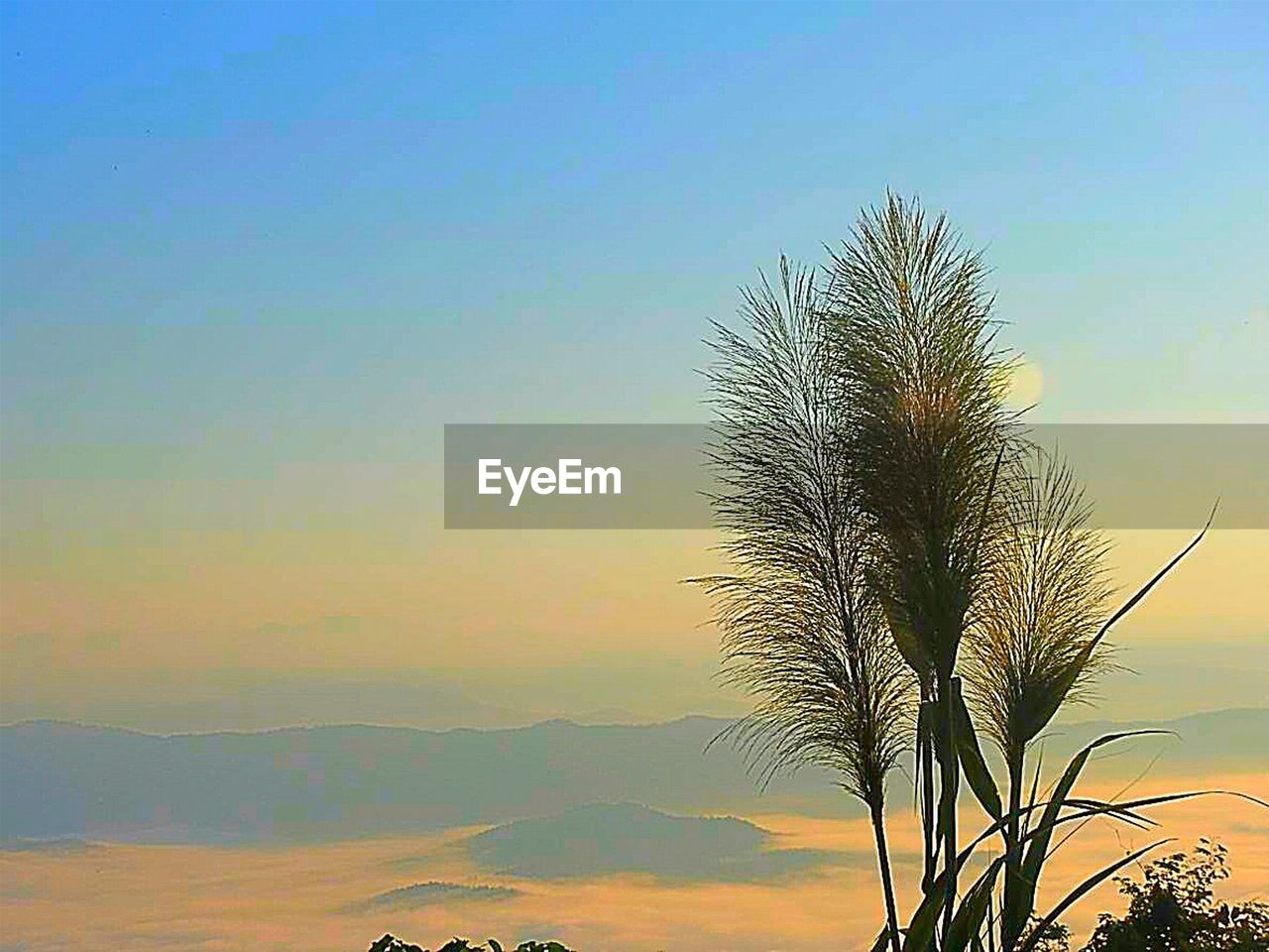 sky, plant, beauty in nature, growth, tranquility, scenics - nature, nature, tree, no people, sunset, tranquil scene, outdoors, green color, palm tree, cloud - sky, day, leaf, tropical climate, idyllic, palm leaf