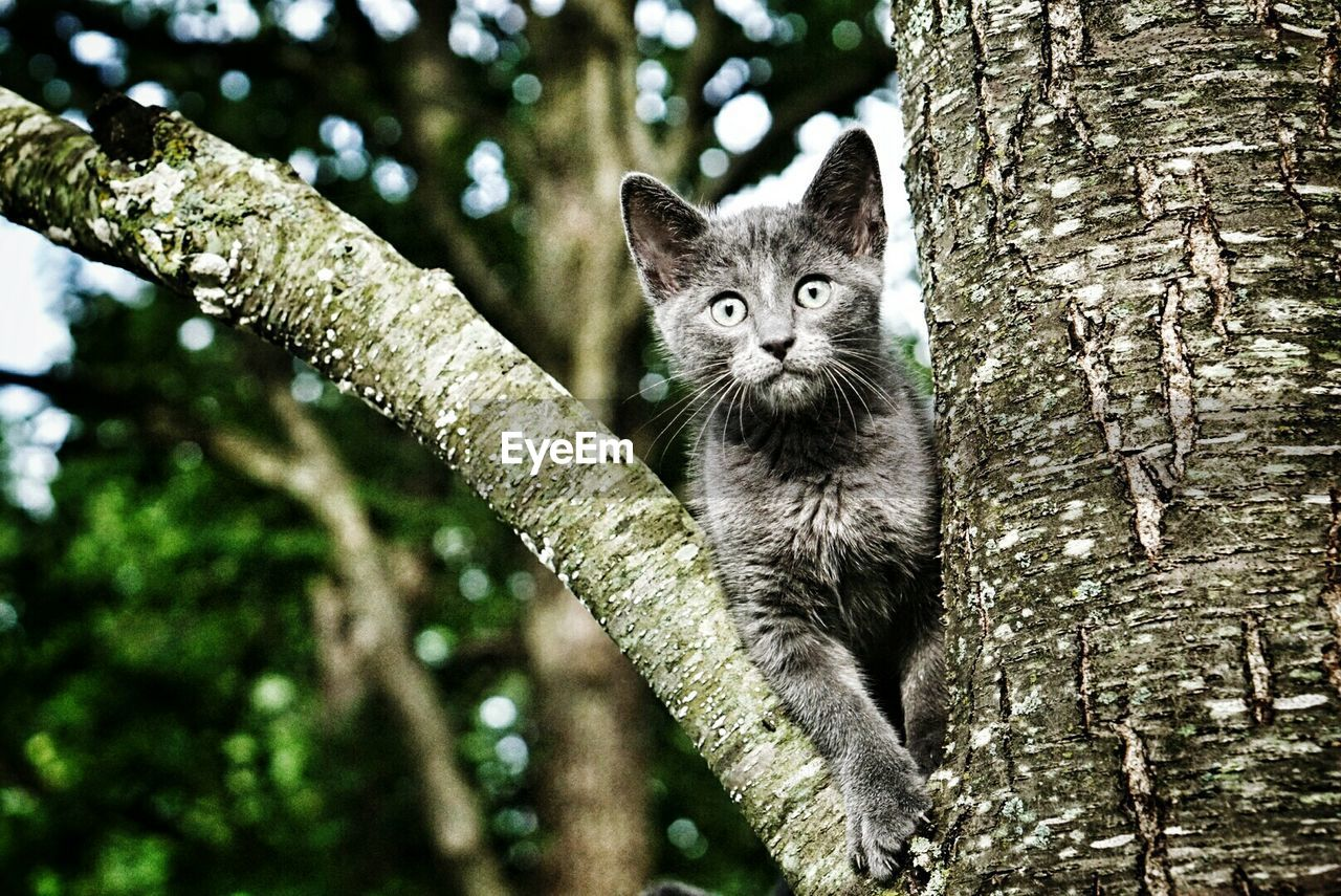 Portrait of a cat on tree trunk