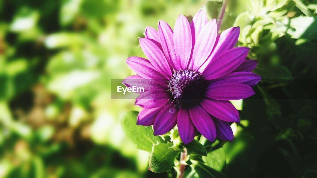 High Angle View Of Purple Flower Blooming On Field