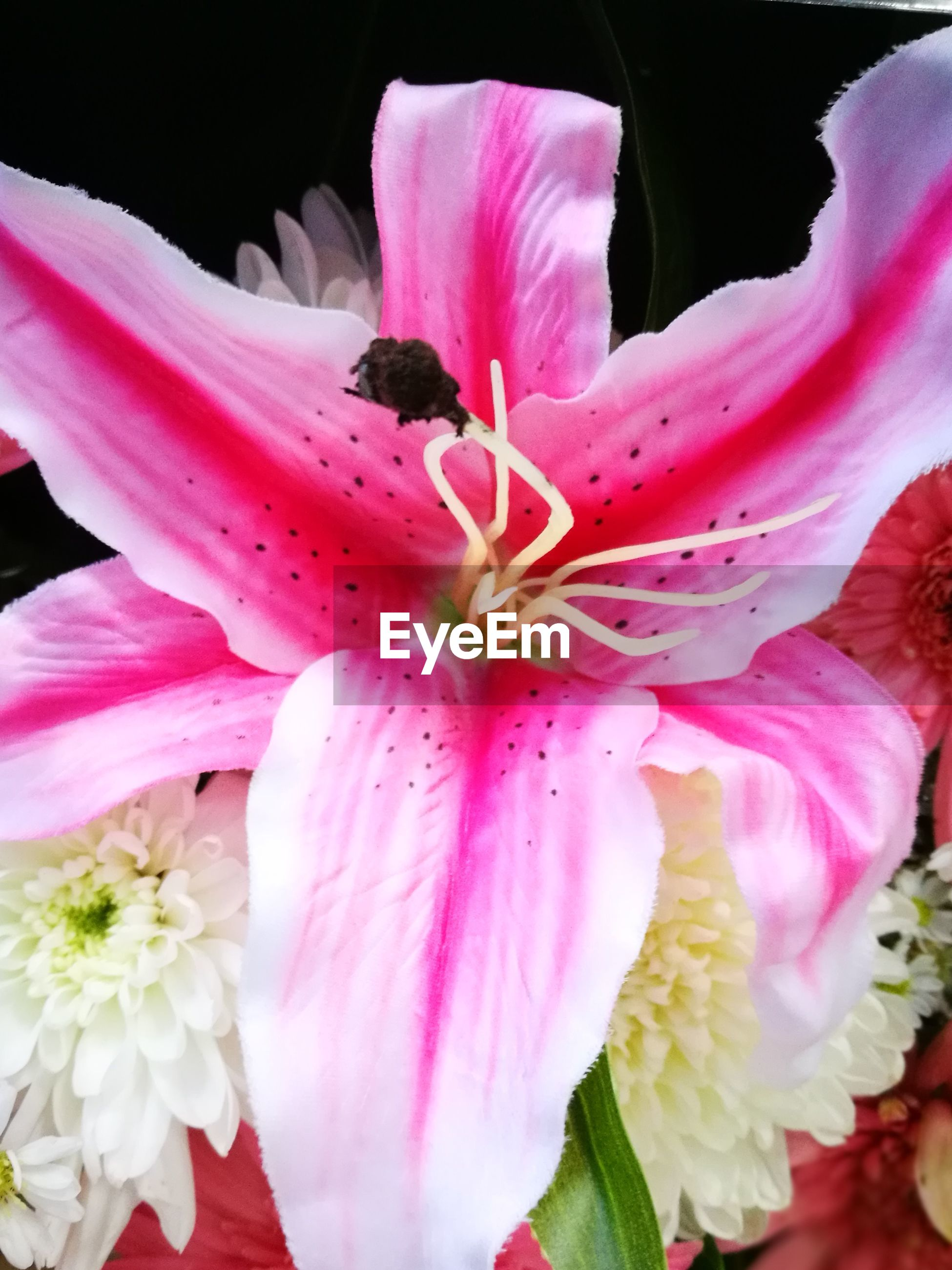 flower, petal, fragility, flower head, beauty in nature, pink color, freshness, no people, growth, nature, close-up, pollen, stamen, plant, outdoors, day, blooming, day lily