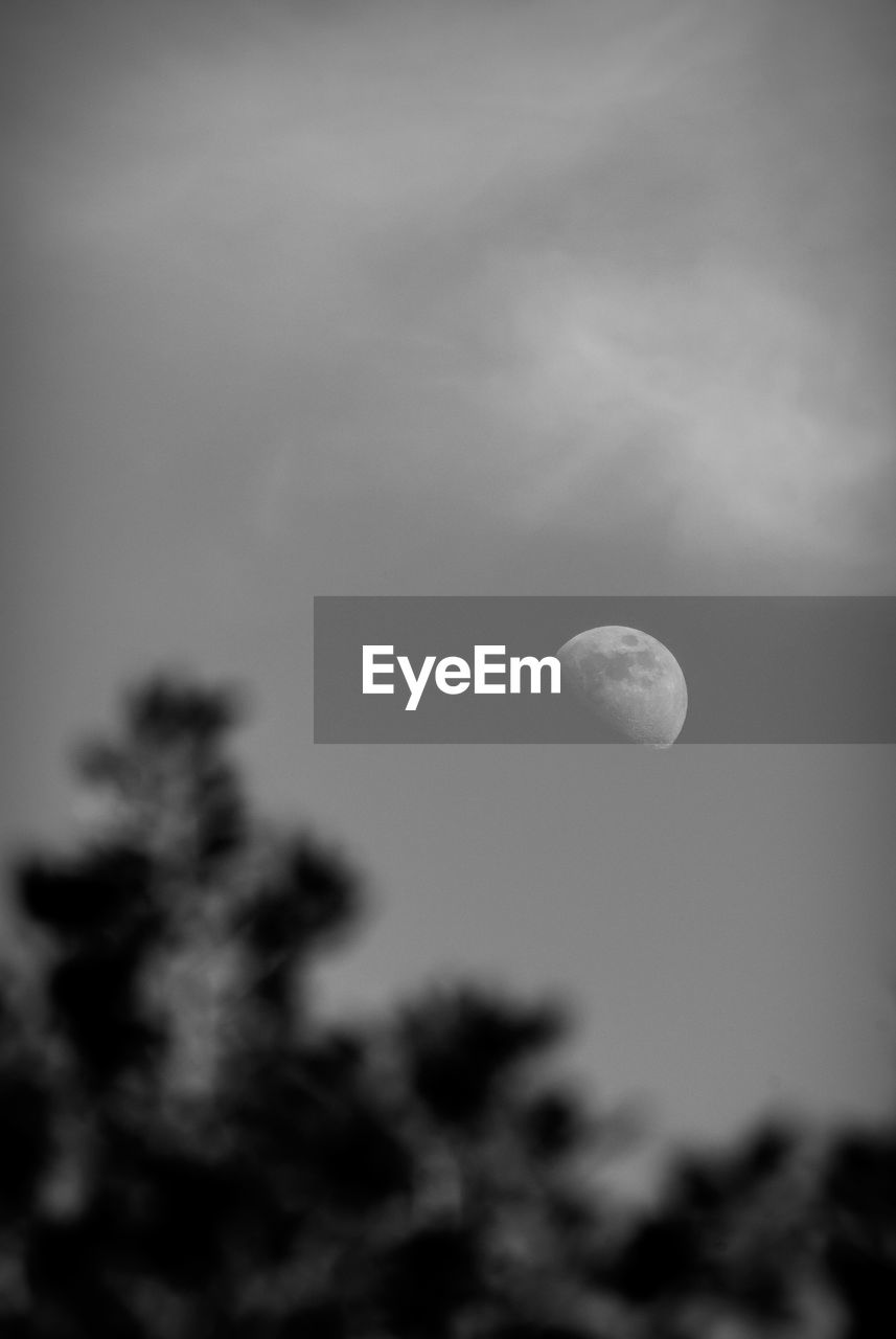 sky, moon, cloud - sky, beauty in nature, astronomy, space, tranquility, low angle view, planetary moon, nature, night, no people, tranquil scene, scenics - nature, outdoors, idyllic, half moon, dusk, selective focus, full moon, moonlight, space and astronomy