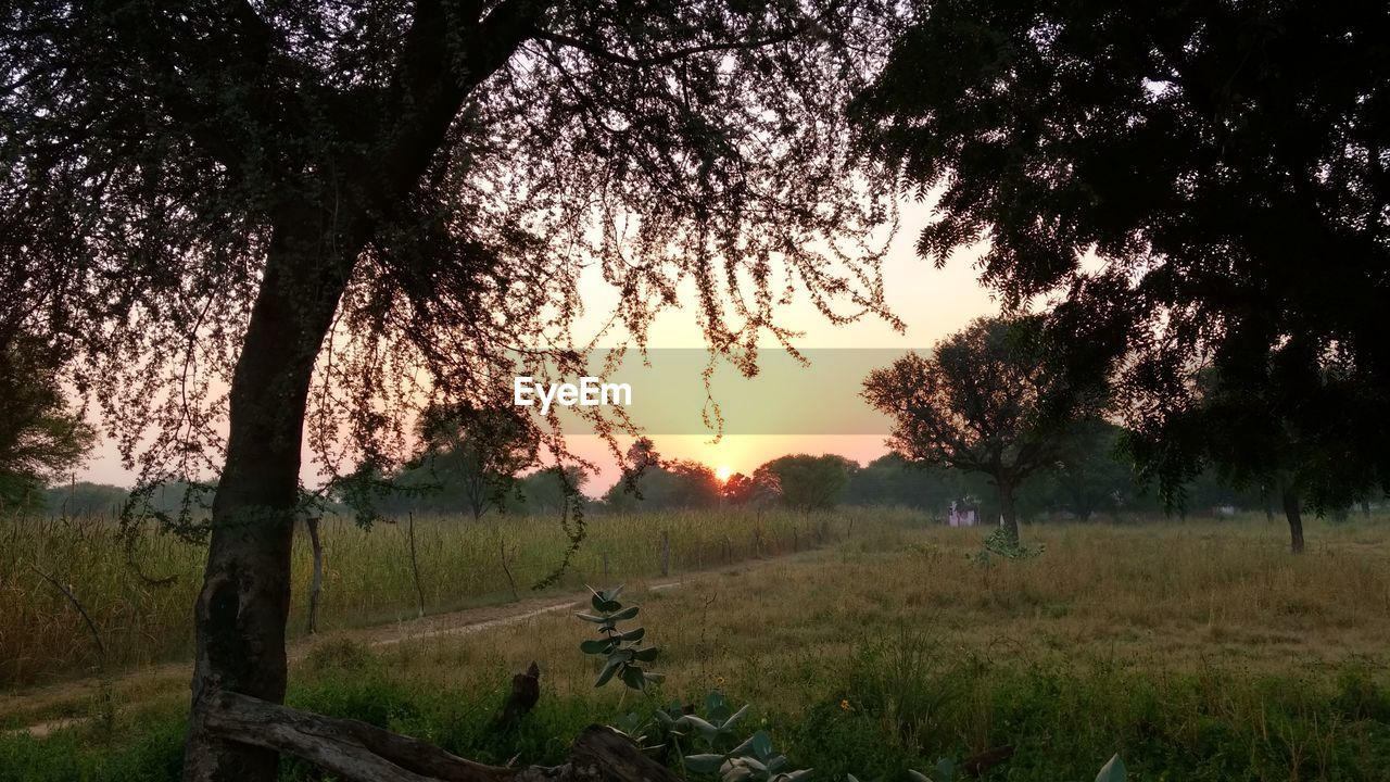tree, tranquil scene, field, sunset, nature, tranquility, scenics, grass, beauty in nature, growth, no people, landscape, outdoors, sky, water, rural scene, day
