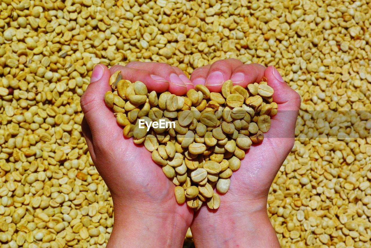 Close-Up Of Human Hand Holding Coffee Beans