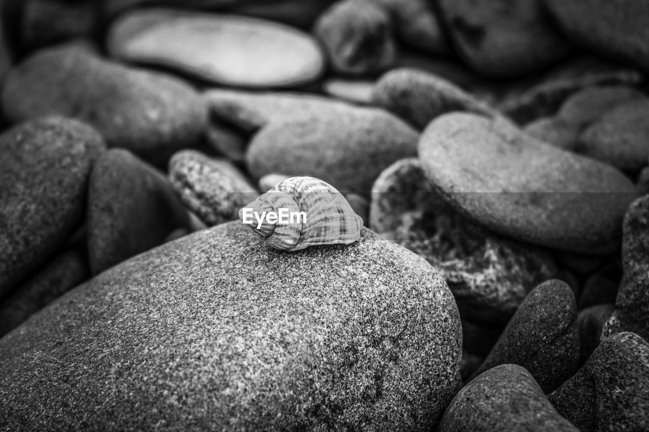 solid, rock, close-up, no people, stone - object, stone, pebble, rock - object, shell, large group of objects, selective focus, still life, animal shell, beach, focus on foreground, day, nature, animal wildlife, textured, abundance, marine
