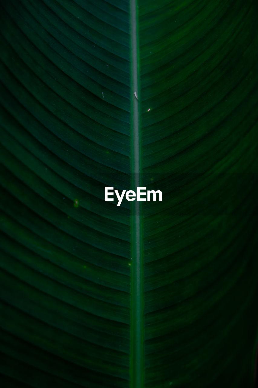 FULL FRAME SHOT OF GREEN LEAF WITH LEAVES
