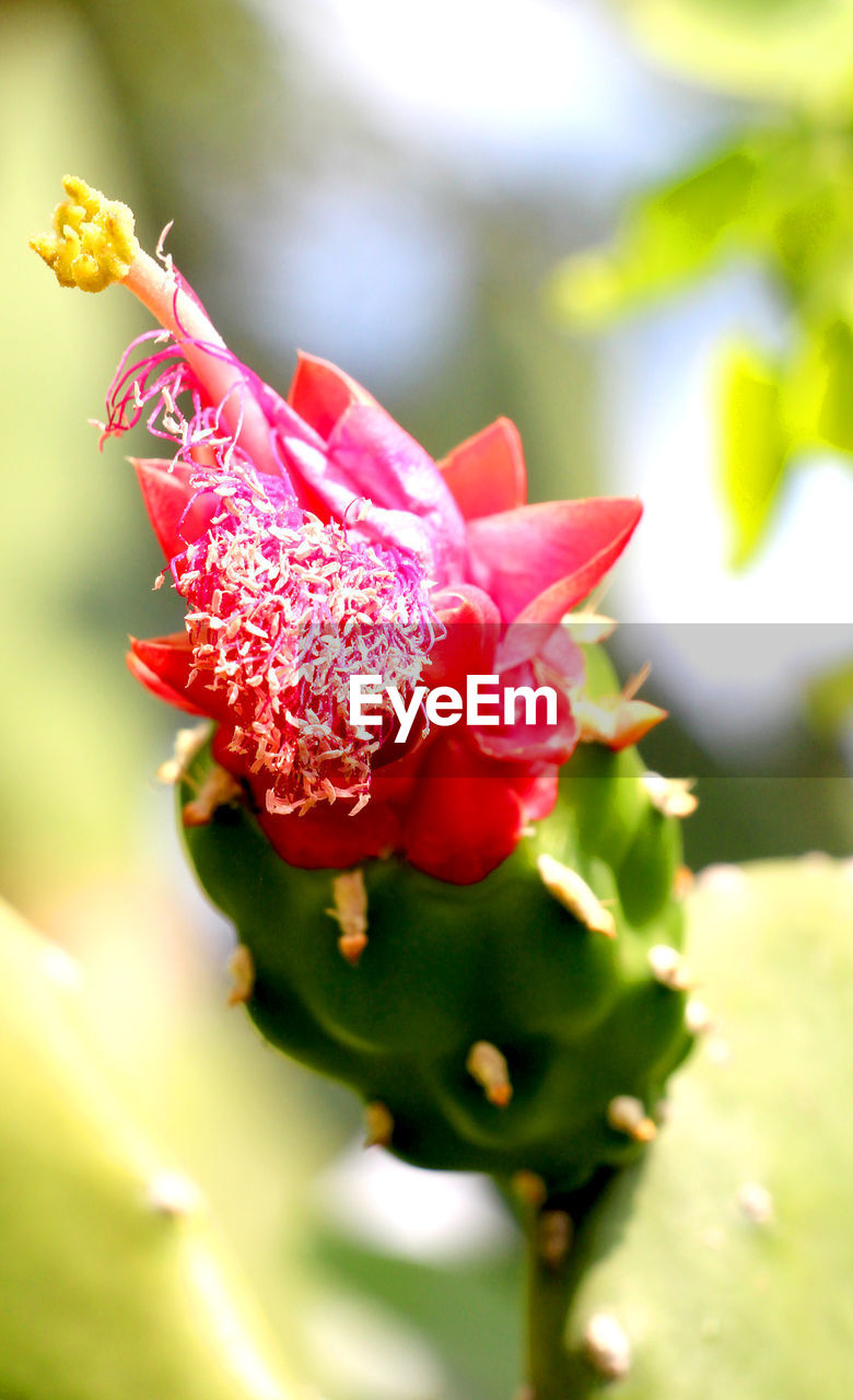 flower, petal, red, nature, growth, beauty in nature, plant, fragility, no people, close-up, outdoors, flower head, blooming, freshness, day