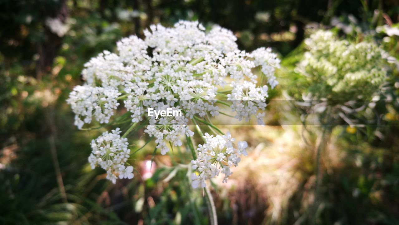 flower, nature, beauty in nature, growth, no people, plant, fragility, outdoors, blooming, freshness, day, close-up