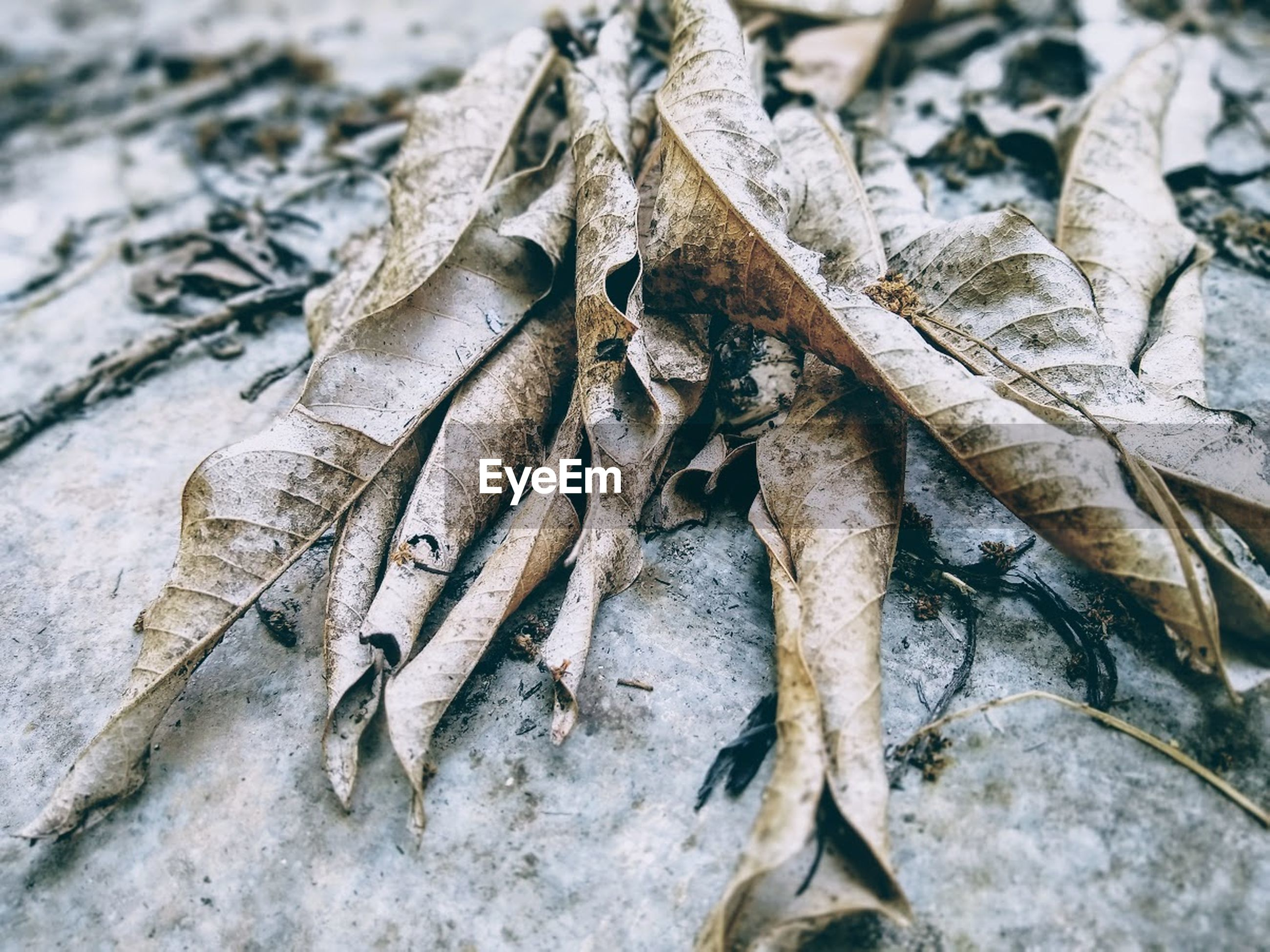 HIGH ANGLE VIEW OF DRIED LEAVES ON PLANT