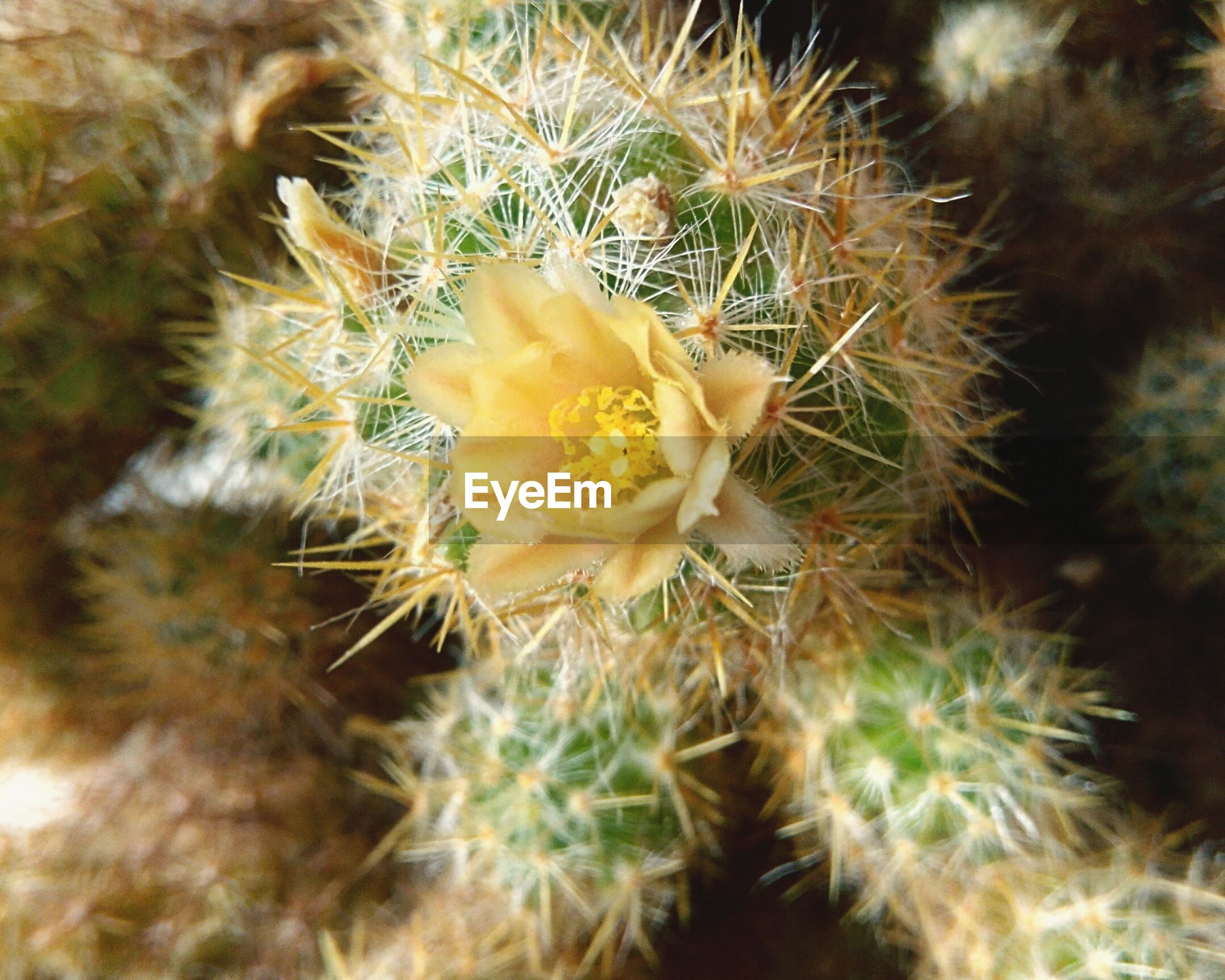 plant, growth, succulent plant, cactus, beauty in nature, close-up, fragility, freshness, vulnerability, flower, nature, no people, day, selective focus, flowering plant, high angle view, inflorescence, thorn, flower head, spiked, outdoors