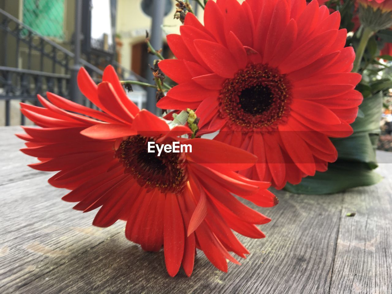 flowering plant, flower, petal, flower head, inflorescence, fragility, freshness, vulnerability, beauty in nature, plant, pollen, close-up, growth, red, nature, daisy, no people, gerbera daisy, focus on foreground, outdoors